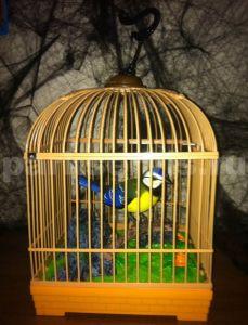 Птичка в квадратной клетке