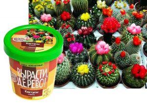 Набор для выращивания  'Кактусы'